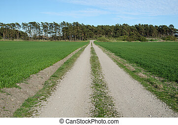 Gravel road in a green landscape