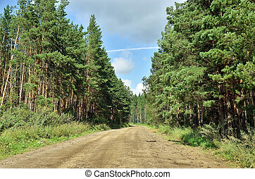 Gravel road in the woods