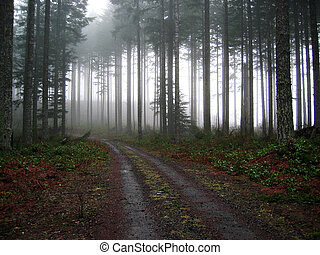 Gravel Road into the Fog - A rural gravel road dissapearing...