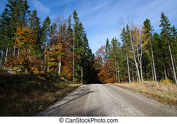 Gravel road into the woods