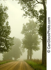 Gravel road old trees drown in morning fog