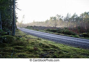 Gravel road through a coniferous forest