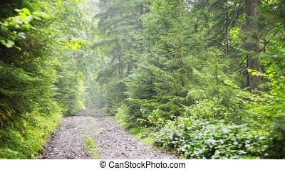 Gravel Road through Forests of Carpathian Mountains - Sun ...
