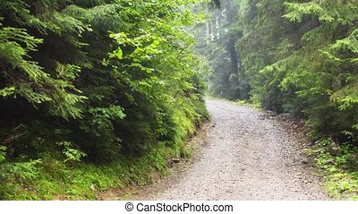 Gravel road through the dense forests of Carpathian Mountains in Ukraine