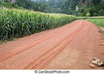 Gravel road with corn