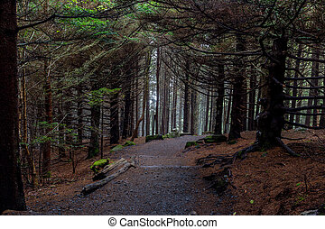 Gravel Trail Cuts Through Dense Pine Forest in Tennessee Mountains