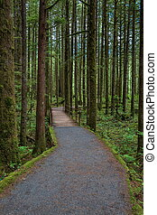 Wooden trail through the Wet forest, trunks of trees and the land is covered with green moss.