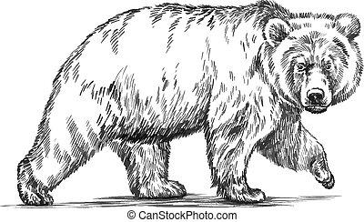 graver, vecteur, ours, isolé, noir, blanc