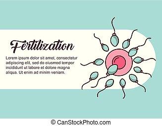gravidez, relatado, fertilização