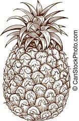 gravura, branca, costas, abacaxi