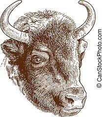 gravura, cabeça, bisonte, ilustração