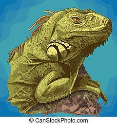 gravura, cabeça, ilustração, iguana