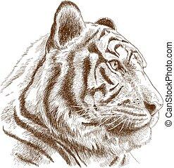 gravura, cabeça tigre, ilustração