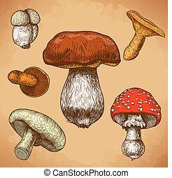 gravura, cogumelos, ilustração