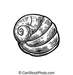gravura, concha, Ilustração,  nautilus, vindima, isolado, fundo, pretas, mar, branca