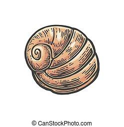gravura, concha, Ilustração,  nautilus, cor, vindima, isolado, fundo, branca, mar