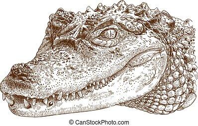 gravura, crocodilo, cabeça, ilustração