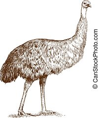 gravura, emu, avestruz
