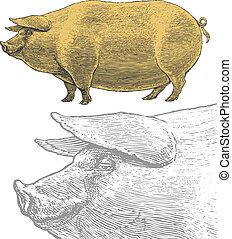 gravura, estilo, ou, suínos, porca