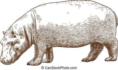 gravura, hipopótamo, ilustração