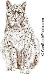 gravura, ilustração, lynx