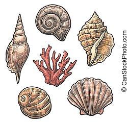 gravura, jogo, fundo, vindima, isolado, mar, shell., branca, illustrations.