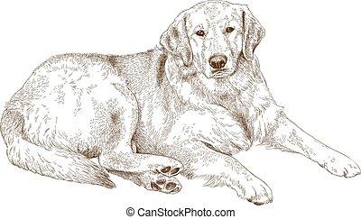 gravura, labrador, ilustração