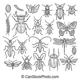 gravura, mosca, sketch., ladybug, insetos, vindima, ant., bee., mão, vetorial, cobrança, besouro, desenhado, borboleta, libélula
