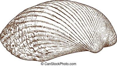 gravura,  Shel, molusco, Ilustração
