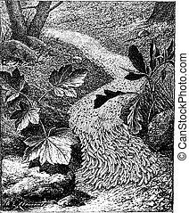gravura, spodoptera, armyworm, vindima, frugiperda, outono, ou