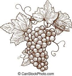 gravura, uvas, ligado, a, ramo