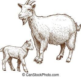 gravura, vetorial, cabra, criança