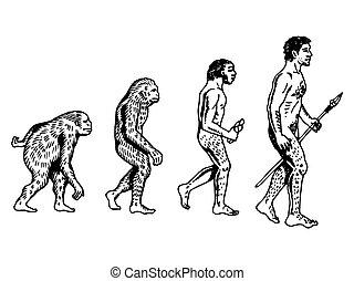 gravure, évolution, vecteur, humain, illustration