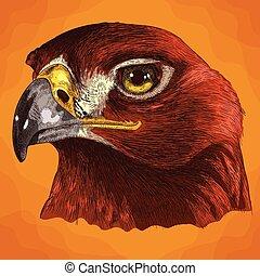 gravure, aigle, tête, illustration