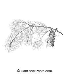 gravure, branche, pinecones, vecteur, vendange, pin