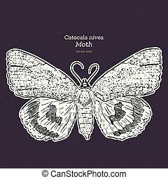 gravure, catocala, holarctic, illustration., moth, ouderwetse , erebidae, gezin, in het algemeen, tekening, -, motten, vector, lijn, soort, of