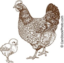 gravure, chicken, illustratie