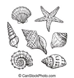 gravure, coquillage, etoile mer, vendange, shells., isolé, collection, main, exotique, vecteur, mer, seashell, mollusque, dessiné, style.