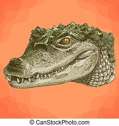 gravure, crocodile, tête, illustration