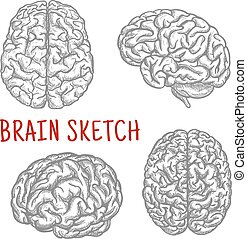 gravure, croquis, différent, cerveau humain, angles