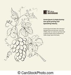 gravure, de, raisins, branch.