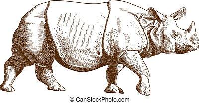 gravure, dessin, illustration, rhinocéros