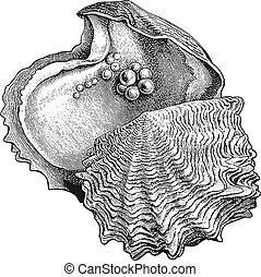 gravure, detail, hoog, parel, vector, oester