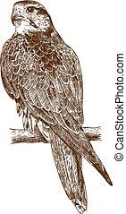 gravure, faucon, dessin, illustration