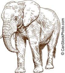 gravure, grand, dessin, illustration, éléphant