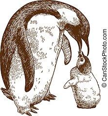 gravure, illustratie, nestling, keizer, tekening, penguin
