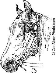 gravure, paarde, mondstuk, ouderwetse , beetje, headcollar