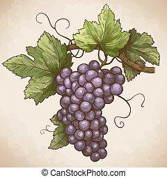 gravure, raisins, sur, les, branche