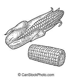 gravure, rijp, maïskolf, ouderwetse , koren, leaves., zonder, vector