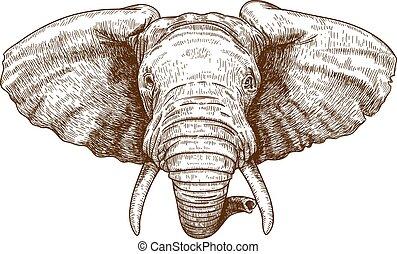 gravure, tête, éléphant